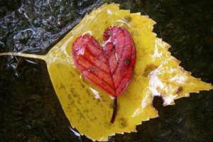 hjärtan i löv