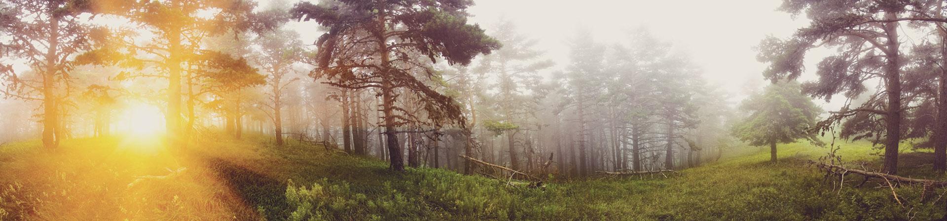 skog sol