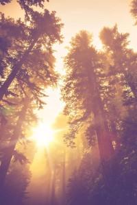 skog sol ditt inre